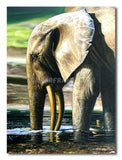Elephant bath - Painting On Canvas at INTERFRAME-ASIA