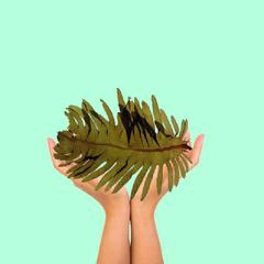 4 Reasons Why WAKAME SEAWEED Is AMAZING For Your Skin