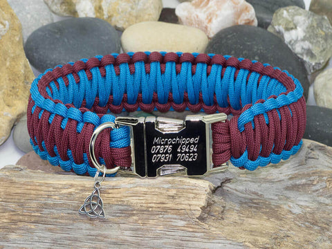 Maroon and Sky Blue Dog Collar