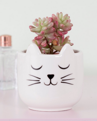 Mini Cat's Whiskers Planter