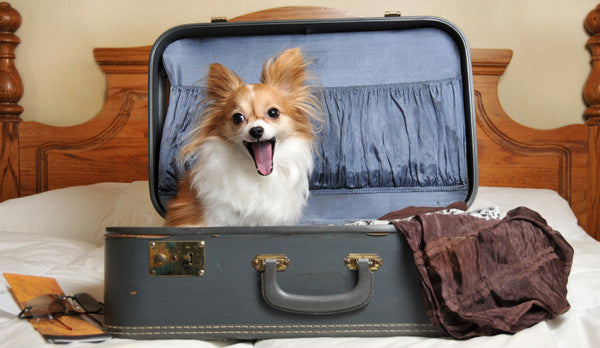 Travel Gear for Pets