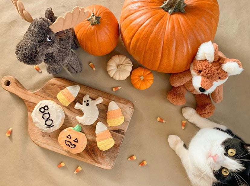 Fall theme display with halloween cookies, pumpkins, stuffed animals and a cat.