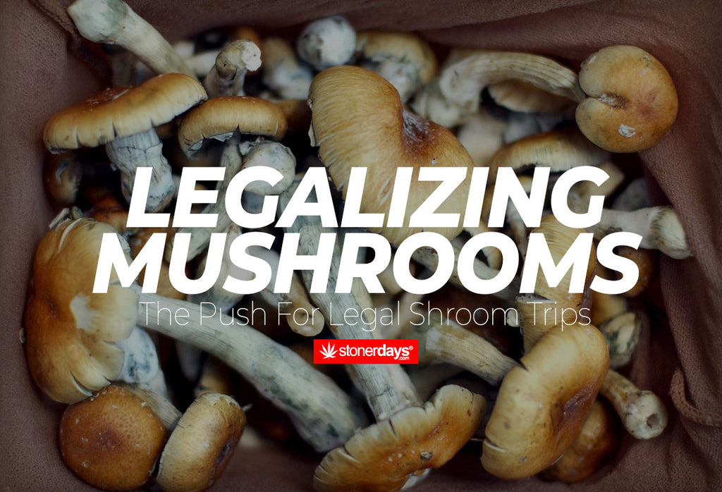 Legalizing Mushrooms; The Push For A Legal Shroom Trips
