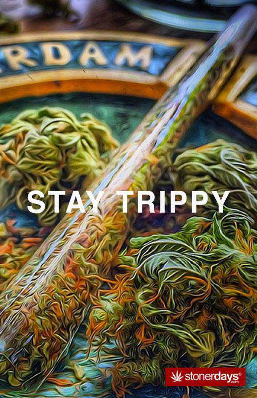 STAY TRIPPY HEMP CARDS