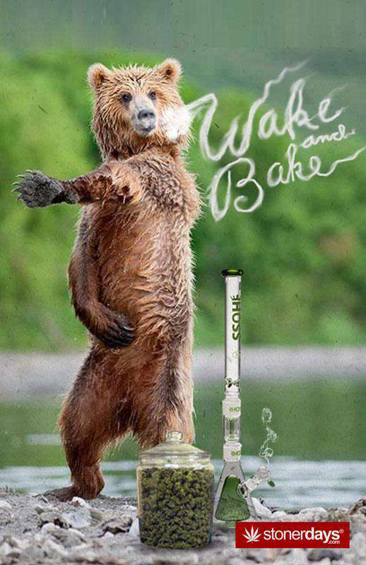WAKE AND BAKE BEAR HEMP CARDS