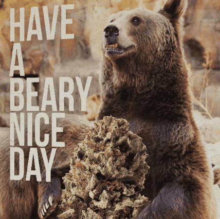 HAVE A BEARY NICE DAY HEMP GREETING CARD