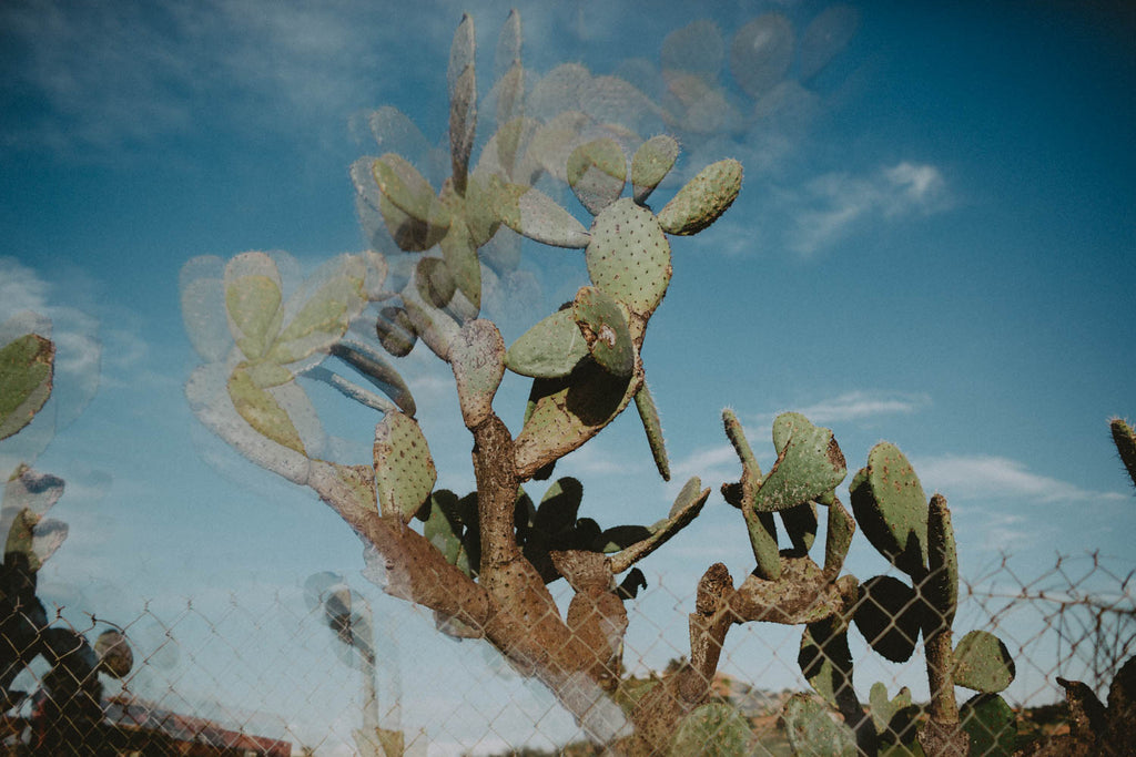 Photographic Print | Trippy Cactus