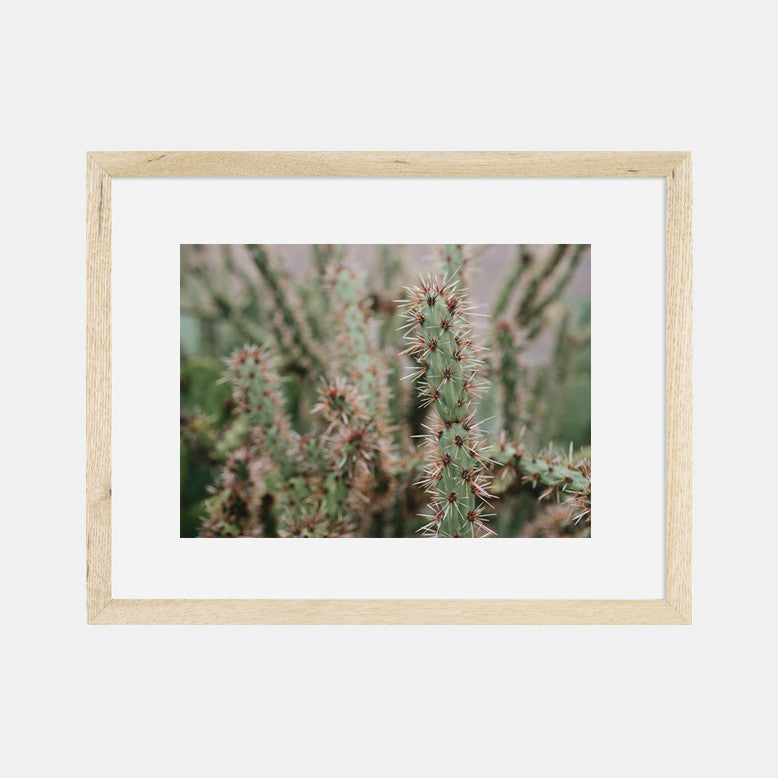 Photographic Print | Cactus