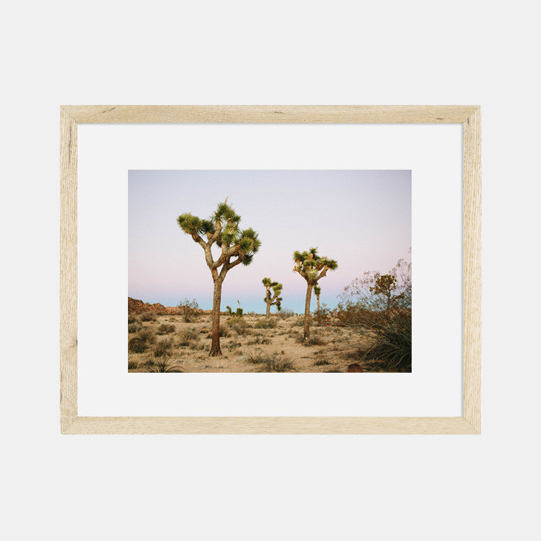 Photographic Print | Joshua Tree