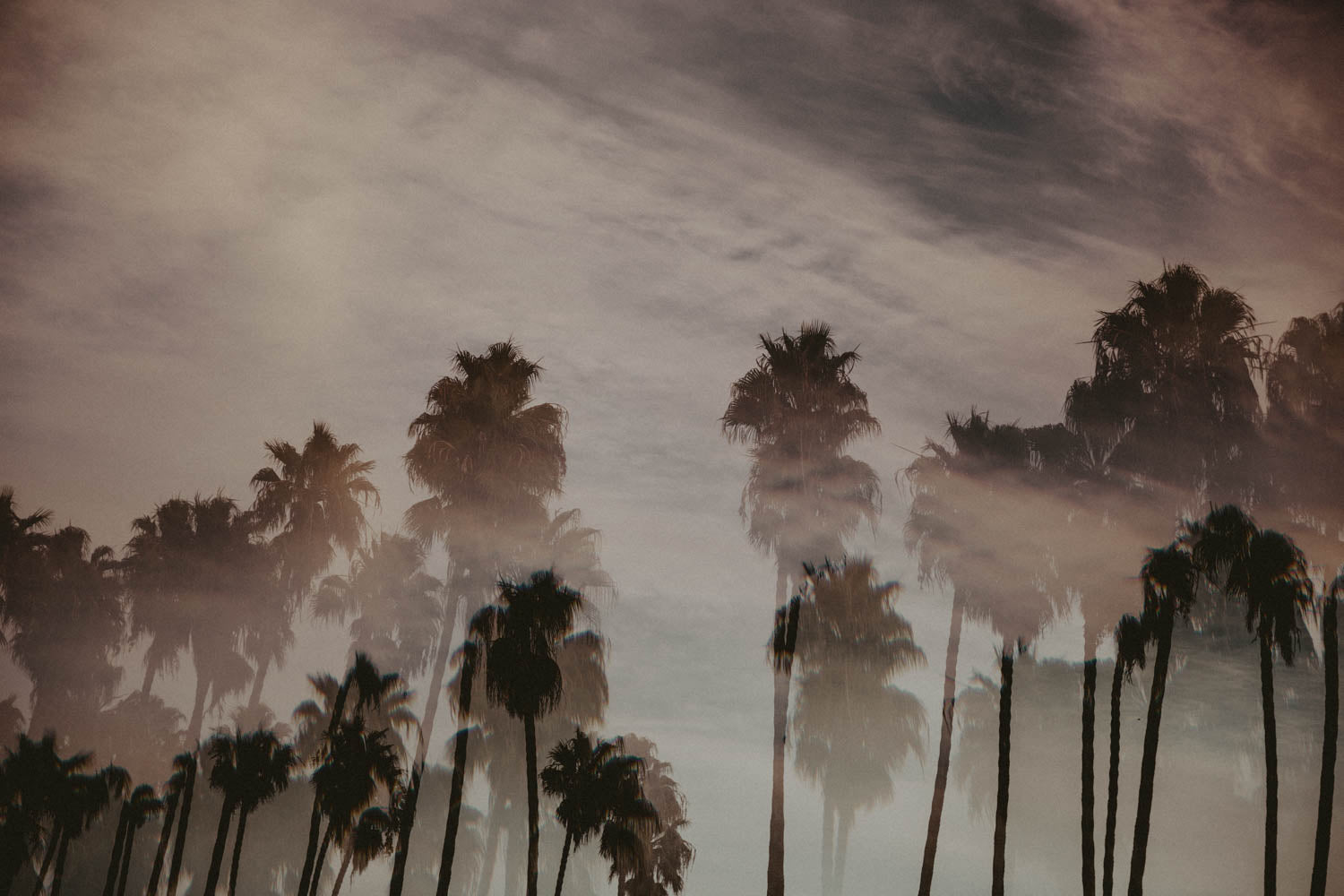 Photographic Print | California Dreamin'