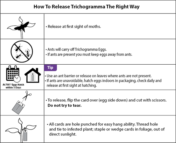 trichogramma release instructions