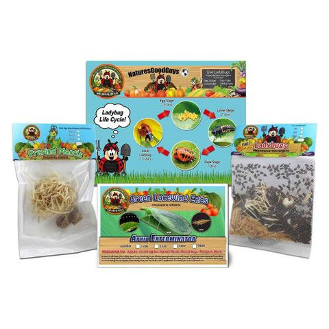 1,500 Live Ladybugs  & 2 Praying Mantis Egg Cases in Pouch & 1,000 Green Lacewing Eggs