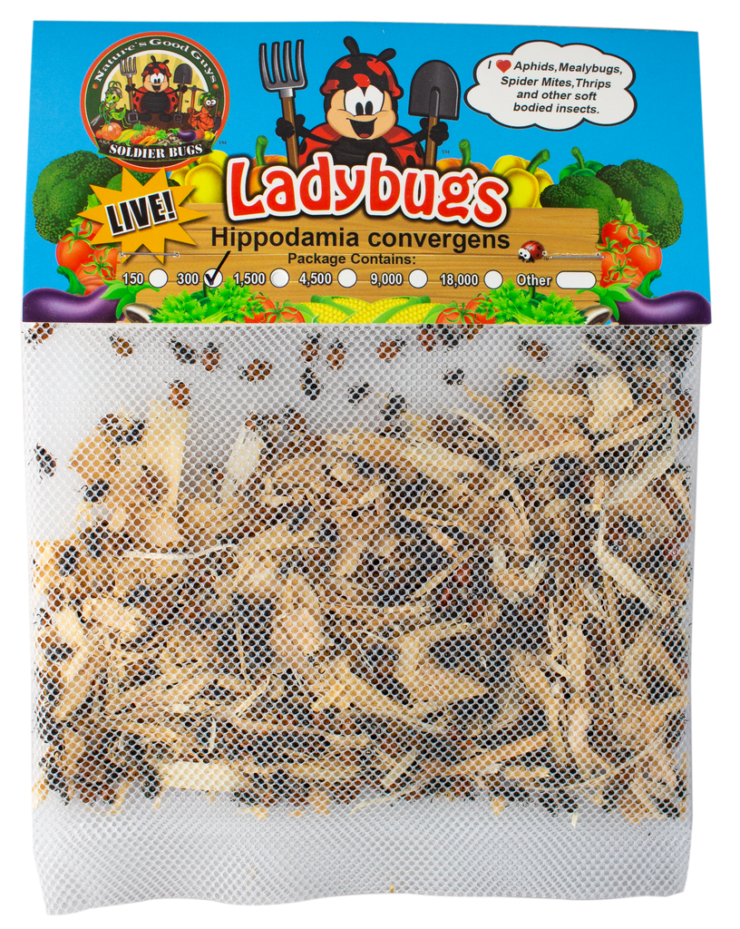 Live Ladybugs - General Predators