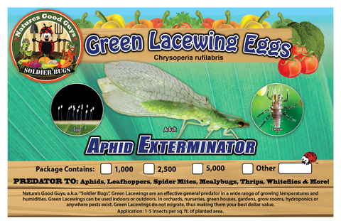 Green Lacewing Eggs - Good Bugs - Aphid Exterminator