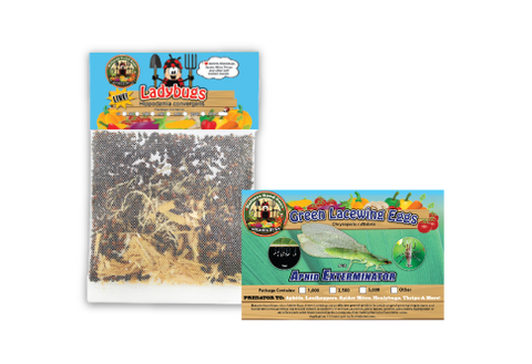 Small Ladybug Garden Pack