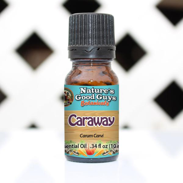 Carum carvi - Caraway Oil