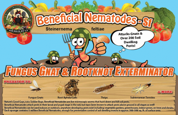 SF Beneficial Nematodes - attacks Fungas Gnat, Rootknot, Root Aphid and other soil pests!