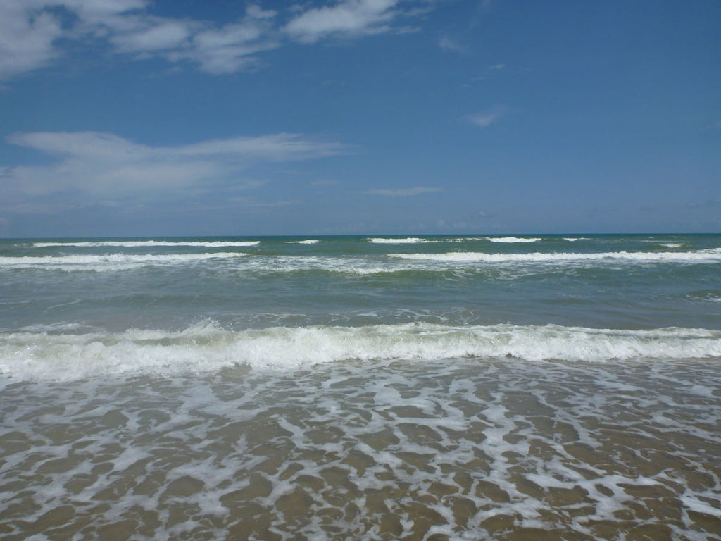 Friends of Padre Beach Report 9/2/2015
