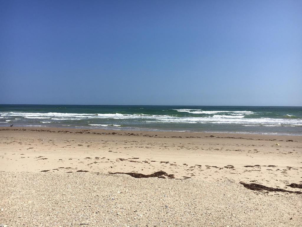 Friends of Padre Beach Report 3/16/2017