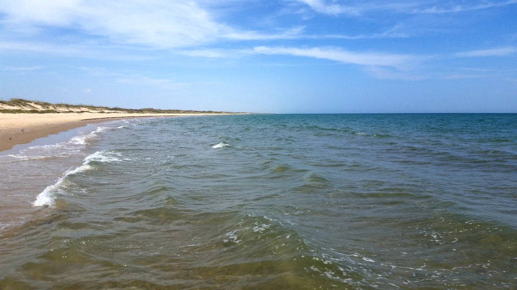 Friends of Padre Beach Report 8/13/2015
