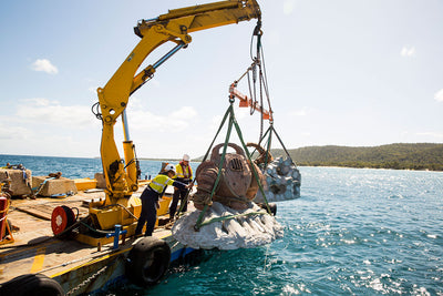 LEAGUE OF LEGEND'S, NAUTILUS BURIED OFF THE AUSTRALIAN COAST