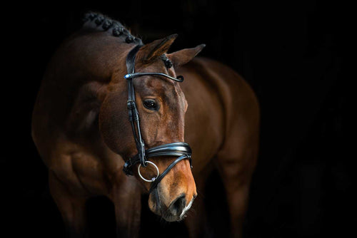 PS of Sweden GP Bridle
