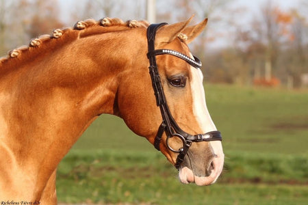 SD Design Bellissimo Bridle Black