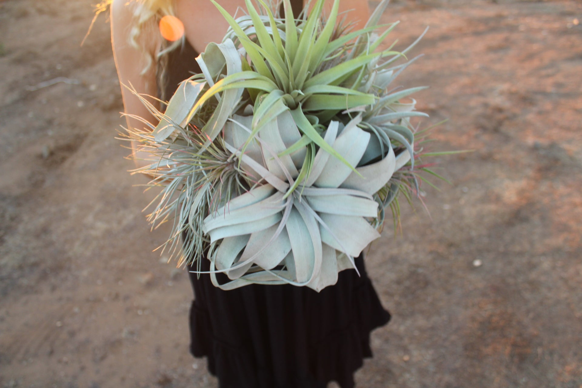 Air Plant Bouquet The Dusty Jewel