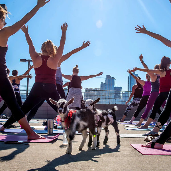 Austin Bachelorette Party Ideas - Baby Goat Yoga