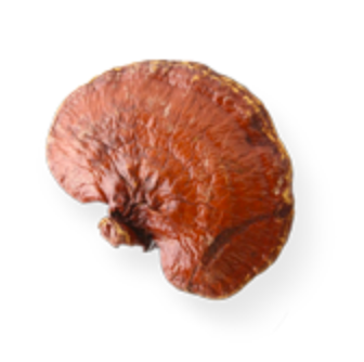 reishi mushrooms coffee