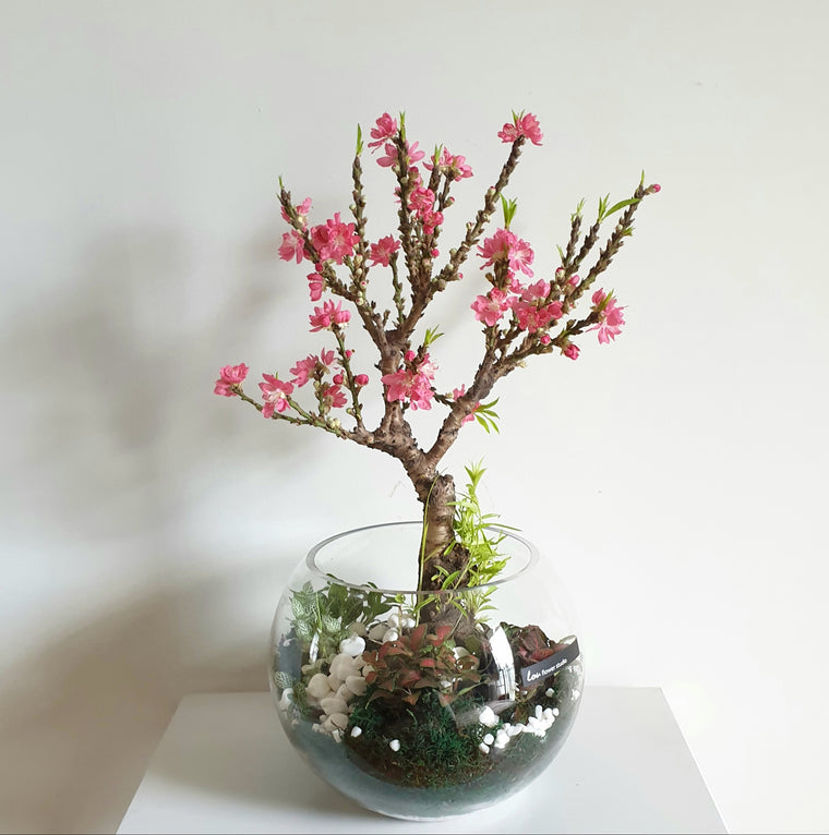 CNY Peach Blossom Bowl - Lou Flower Studio