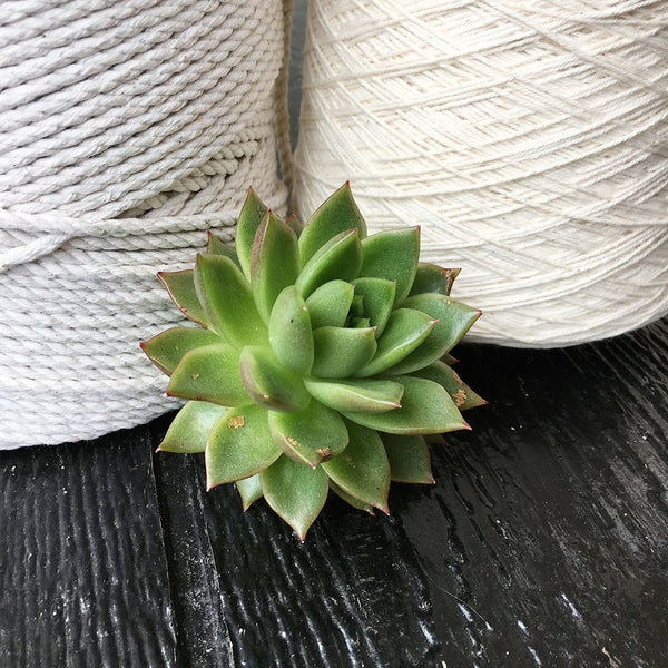 DIY: How To Fix An Ugly Succulent
