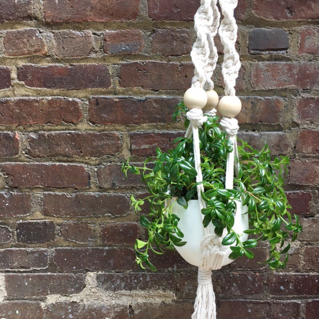 Macrame Plant Hanger Workshop
