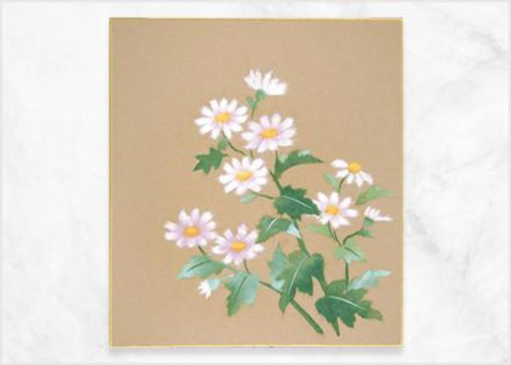 Japanese white daisy