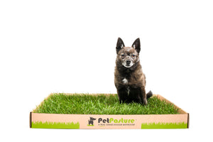 Original Pet Pasture Box