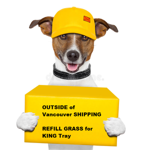 OUTSIDE of Vancouver REFILL GRASS for KING Tray (SHIPPING)