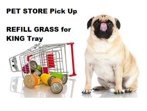 REFILL GRASS  for KING Tray- PET STORE Pick Up