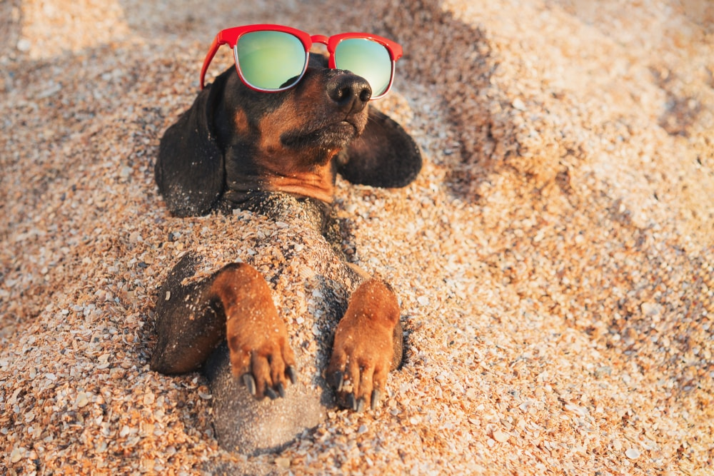 15 Dachshund Gifts - Unique Gifts for Dachshund Lovers