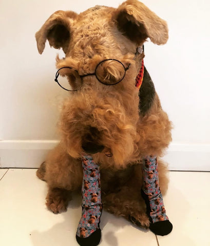 Dog Wearing Custom Socks