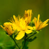 St. John's Wort Herbal Body Oil