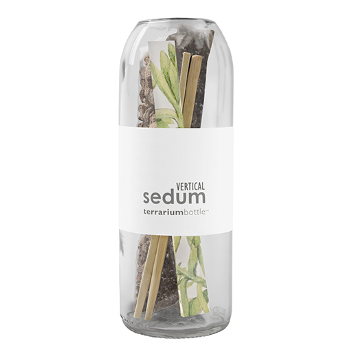 Vertical Sedum Terrarium Bottle