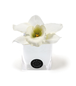 White Orchid Gift Set