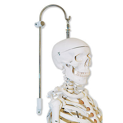 Multifunctional Stand for Spines & Skeletons - 3 Part
