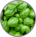 Basil Extract for acne
