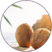 Coconut Oil KEY INGREDIENTS of WOW Skin Science Coconut Face Cream