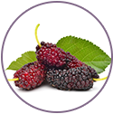 Mulberry - Ingredient Of Wow Skin Science Brightening Vitamin C Foaming Face Wash
