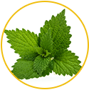 Nettle Leaf Extract & Saw Palmetto Extracts
