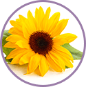 sunflower_biolipds