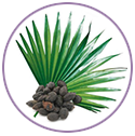 Saw Palmetto and Nettle Leaf Extracts