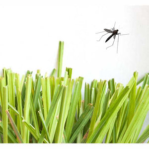 BUG-OFF SPRAY- Citronella, Rosemary, Lavender + Lemongrass Insect Repellent Spray